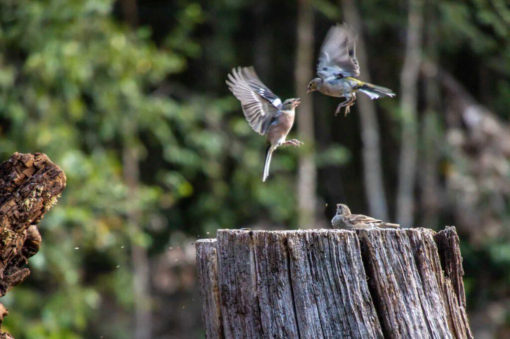 vliegende vogels cp