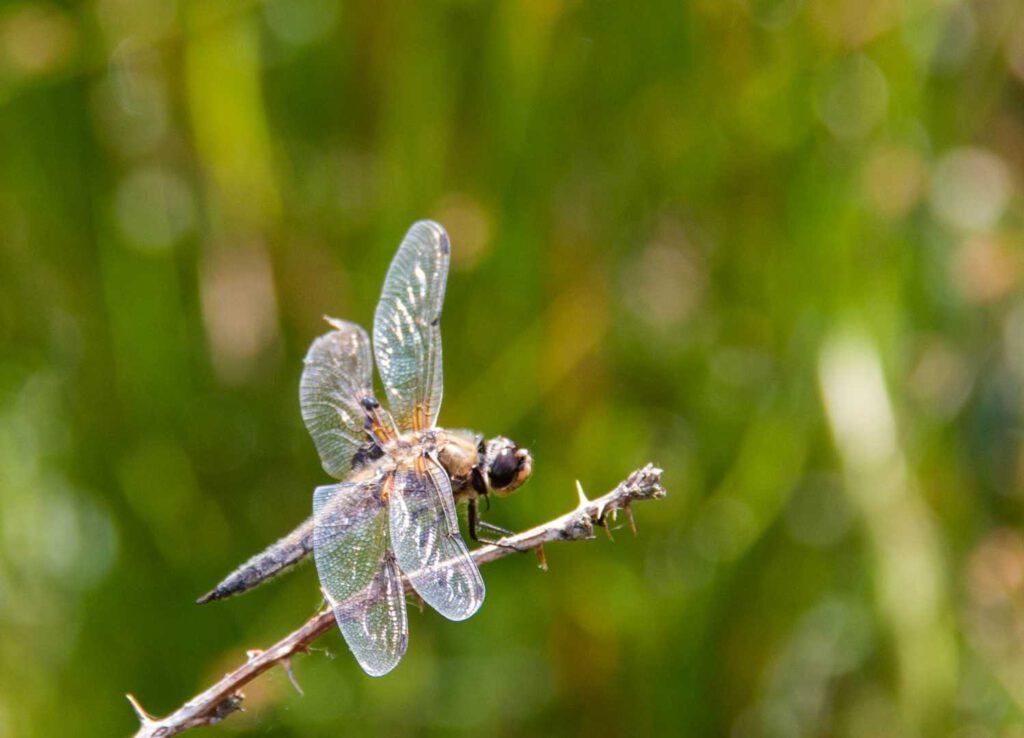 libelle cp